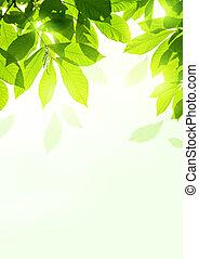 bladeren, zomer, fris