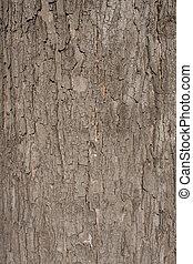 blaffen, textuur, boompje, bruine , afsluiten, shown, boven.