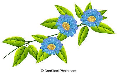 blauw loof, bloemen, groene