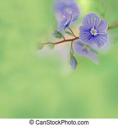 blauwe bloemen, weide