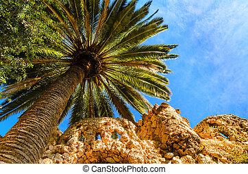 blauwe , boompje, palm, hemel, tegen