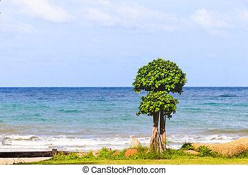 blauwe , boompje, strand, hemel
