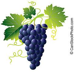 blauwe , druiven, bos