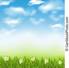 blauwe , gras, natuurlijke , hemel, lente, wolken, akker, achtergrond, bloemen, chamomiles