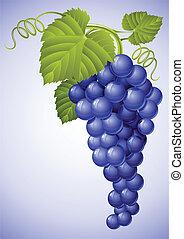 blauwe groep, blad, druif, groene