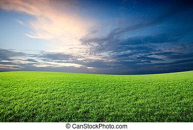 blauwe hemel, akker, groene, onder, fris, gras