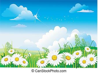 blauwe hemel, chamomile