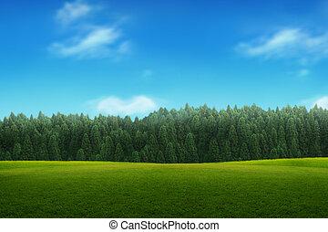 blauwe hemel, jonge, landscape, groen bos