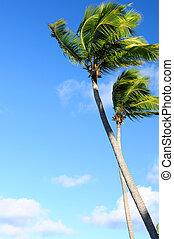 blauwe hemel, palmen