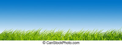 blauwe , panorama., hemel, groene, fris, gras