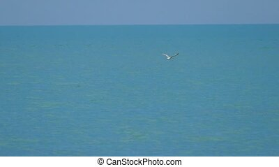 blauwe , slowmotion, vliegen, hemel, achtergrond, zeemeeuw