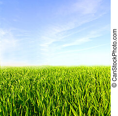 blauwe , wolken, weide, hemel, groen gras