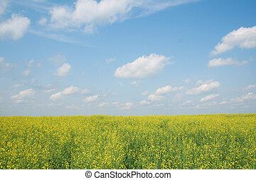 bloeien, landscape