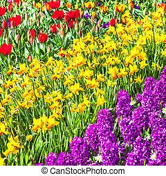 bloeien, park, .holland, tulpen, keukenhof