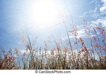 bloem, hemel, gras, wild