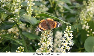 bloem, vlinder, spring., bush.