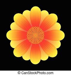 bloem, zonnebloem, abstract