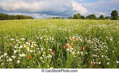 bloemen, akker, landscape, zomer