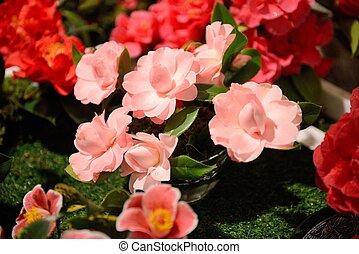 bloemen, camellia, tentoonstelling