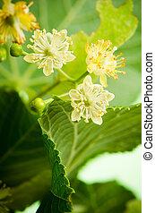 bloemen, close-up, kalk