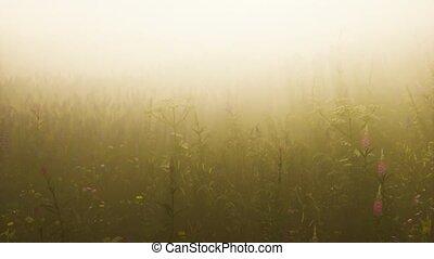 bloemen, diep, akker, mist, wild