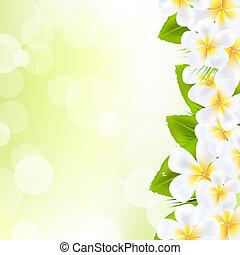 bloemen, frangipani, blad
