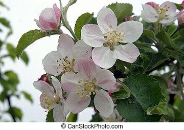 bloemen, fruit