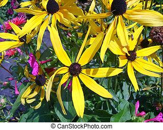 bloemen, gele
