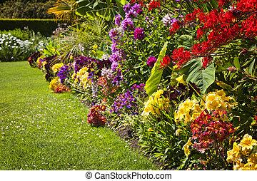 bloemen, tuin, kleurrijke