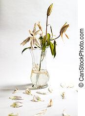 bloemen, vaas, sterven