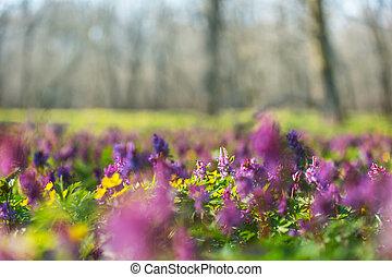 bloemen, weide