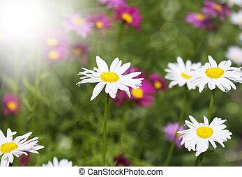 bloemen, weide, zomer