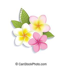 bloemen, witte , vector, plumeria, achtergrond