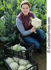 bloemkool, vrouw, fris, oogst