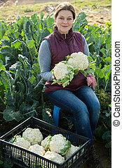 bloemkool, vrouw, oogst