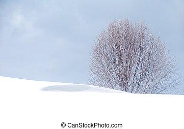 blues, winter