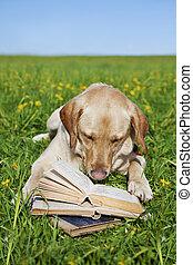 boek, lezende , dog