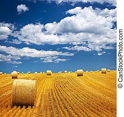 boer veld, balen, hooi