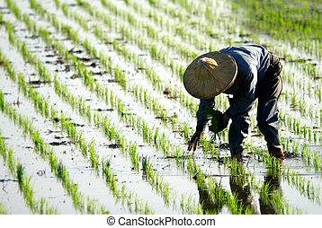 boerderij, werkende , farmer