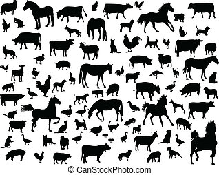 boerderijdieren