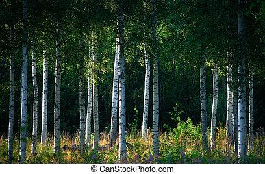bomen, berk