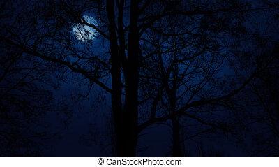 bomen, maan, voorbij, verhuizing, boven, langzaam