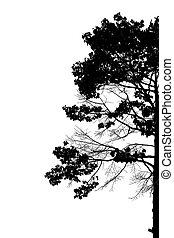 bomen., silhouette