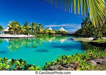 bomen, tropische , vakantiepark, palm, lagune, groene