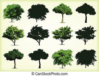 bomen., vector, groene, verzameling, illustratie