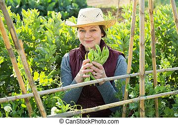 bonen, vrouw, breed, oogst