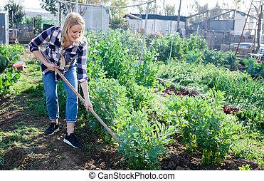 bonen, vrouw, werkende , mattock, tuinman, seedlings, tuin