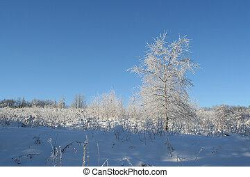 boom winter