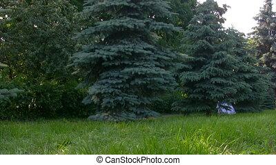 boompje, achter, park, meisje, wandelingen