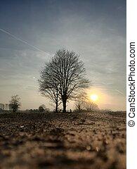 boompje, achter, silhouette, ondergaande zon , landelijk